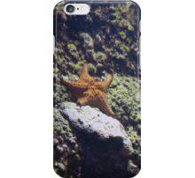 Baltimore Aquarium Series 14 iPhone Case/Skin