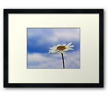 Daisy Daisy Framed Print