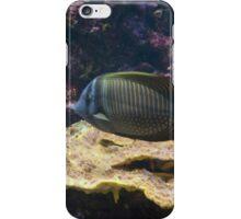 Baltimore Aquarium Series 13 iPhone Case/Skin