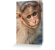 Bonnet Macaque Baby Greeting Card