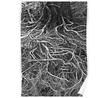 Eroded Roots Poster