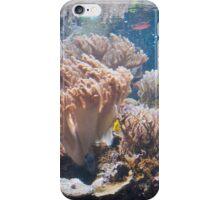 Baltimore Aquarium Series 7 iPhone Case/Skin