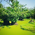 Green World by Katayoonphotos