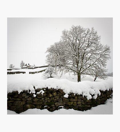 Thwaite waits Photographic Print