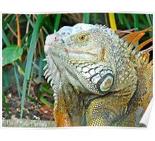 Iguana-soar-US Poster
