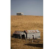 farmscapes #71, lone cow Photographic Print