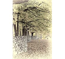 Wall in the woods Photographic Print