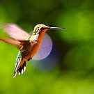hummingbird by Jacque Gates