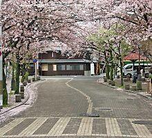 Cherry Blossom Lane by phil decocco