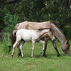 Cumberland Island Georgia Wild Mare with Foal by KellyDC