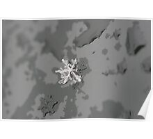 Snow's Flake - The border between water and ice Poster