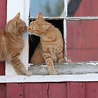 2 Orange Cats at the Barn by livinginoz