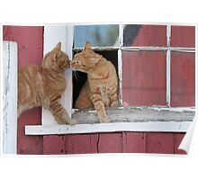 2 Orange Cats at the Barn Poster