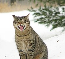 Jake the Cat in the Snow by livinginoz