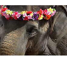 Elephant with Headdress Photographic Print