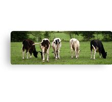 Cows in the Field Canvas Print