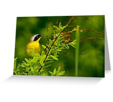 Common Yellow Throat Warbler - Ottawa, Ontario Greeting Card