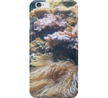 Baltimore Aquarium Series 6 iPhone Case/Skin