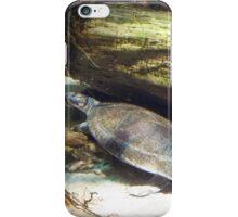 Baltimore Aquarium Series 5 iPhone Case/Skin