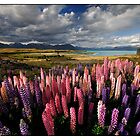 Lupinish Landscape by Robert Mullner