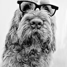 Brown Roan Italian Spinone Head Shot with Glasses by heidiannemorris