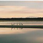 Pelicans at Dawn by TripleC