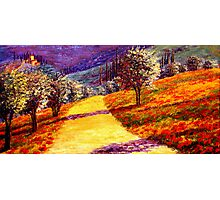 Road Through the Olive Grove Hill Photographic Print
