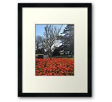 Dutch Tulip Fesival, Hamilton Gardens, New Zealand Framed Print