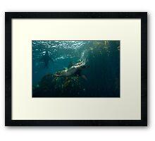 Aquatic K9 Framed Print