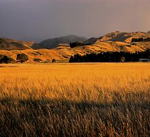 Marlborough Gold by Robyn Carter