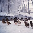 Ducks in the snow. by Esther's Art and Photography