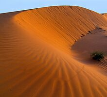 Dune at Sunrise - Perry sand dunes by Hans Kawitzki
