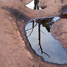 Tree reflected in a rock pool by Pascal and Isabella Inard
