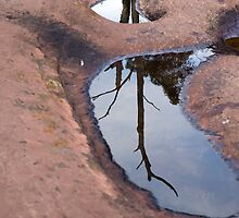 Tree reflected in a rock pool by Pascal Inard