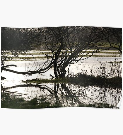 flood water  Poster