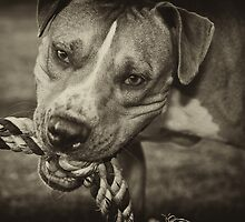 Play with Me! by Craig Hender