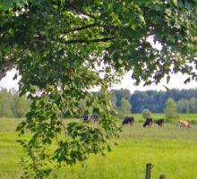 Country scene Sticker