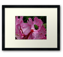 Dinner is Served On A Rhododendron Framed Print