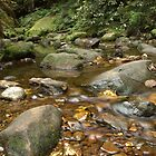 Creek in Blackheath, Blue Mountains by Keith Robinson