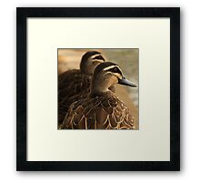 Duck Companion Framed Print