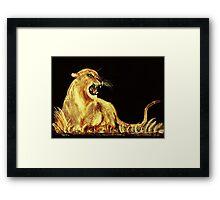 Golden Cat Framed Print