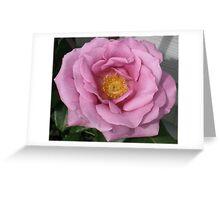 Lavander Rose 3 Greeting Card