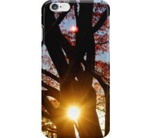 Sunset in the Tree iPhone Case/Skin