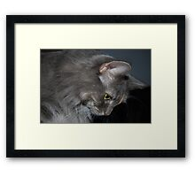 Mia The Maine Coon Cat Framed Print