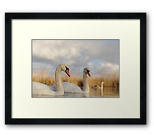 Three Swans Framed Print