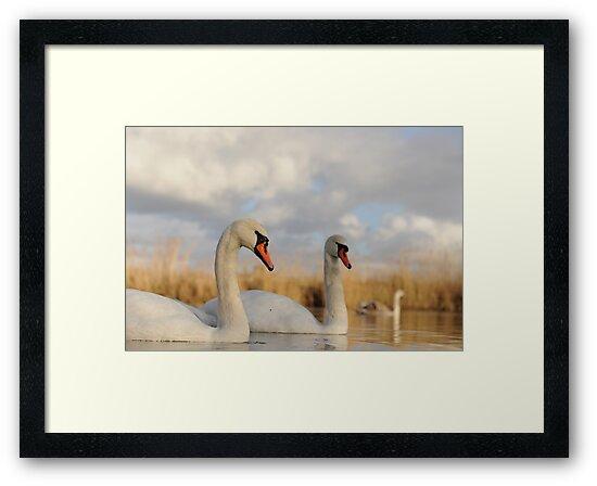 Three Swans by Richard Heeks
