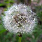 Make a Wish by Bellavista2
