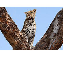 Female leopard, Okavango Delta Photographic Print