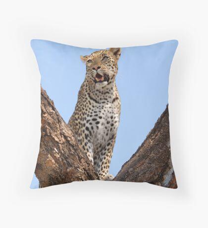 Female leopard, Okavango Delta Throw Pillow