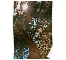 Mossy tree with sun Poster